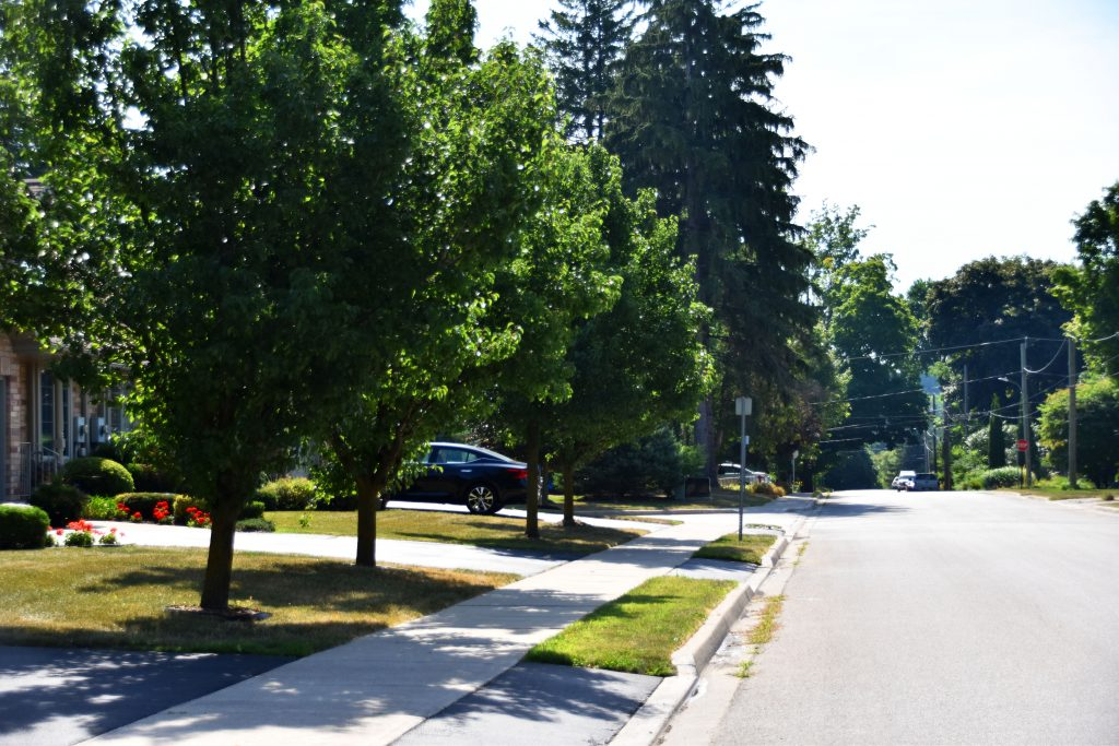 Small trees do not benefit the neighbourhood nearly as much as large, mature trees do