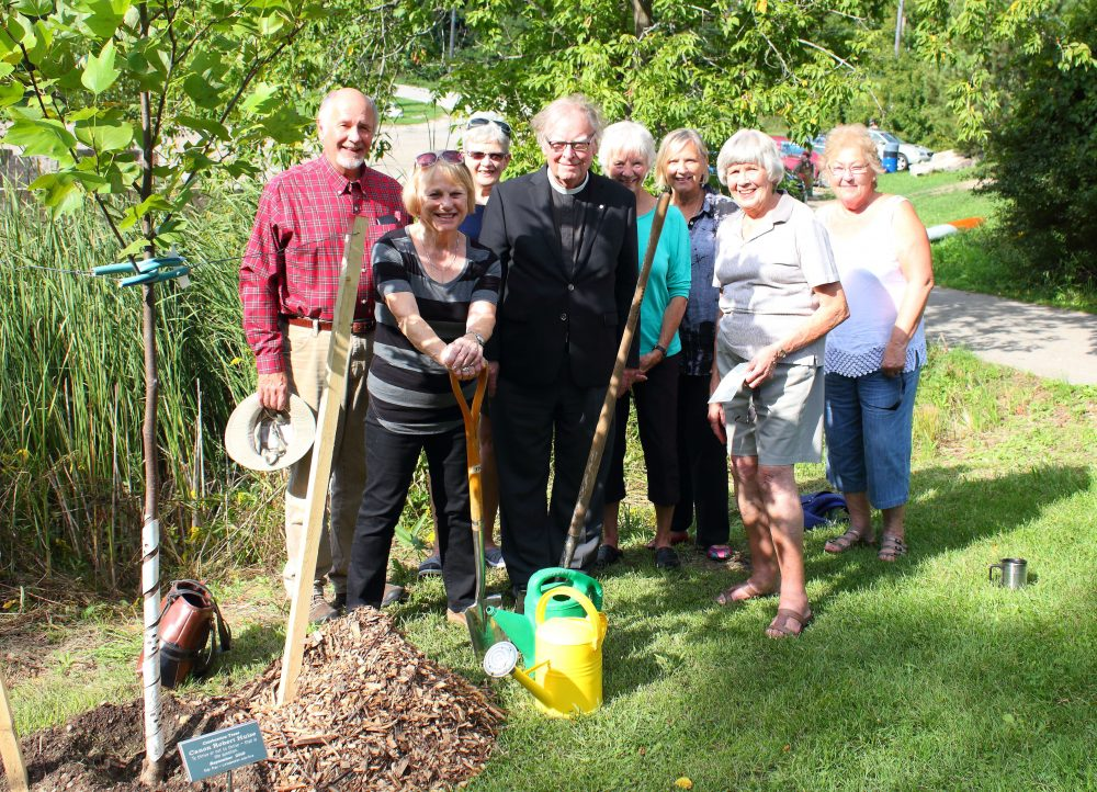Friends of Canon Robert Hulse honour his contribution to Elora with a Tulip Tree planted  in Bissell Park, Elora.