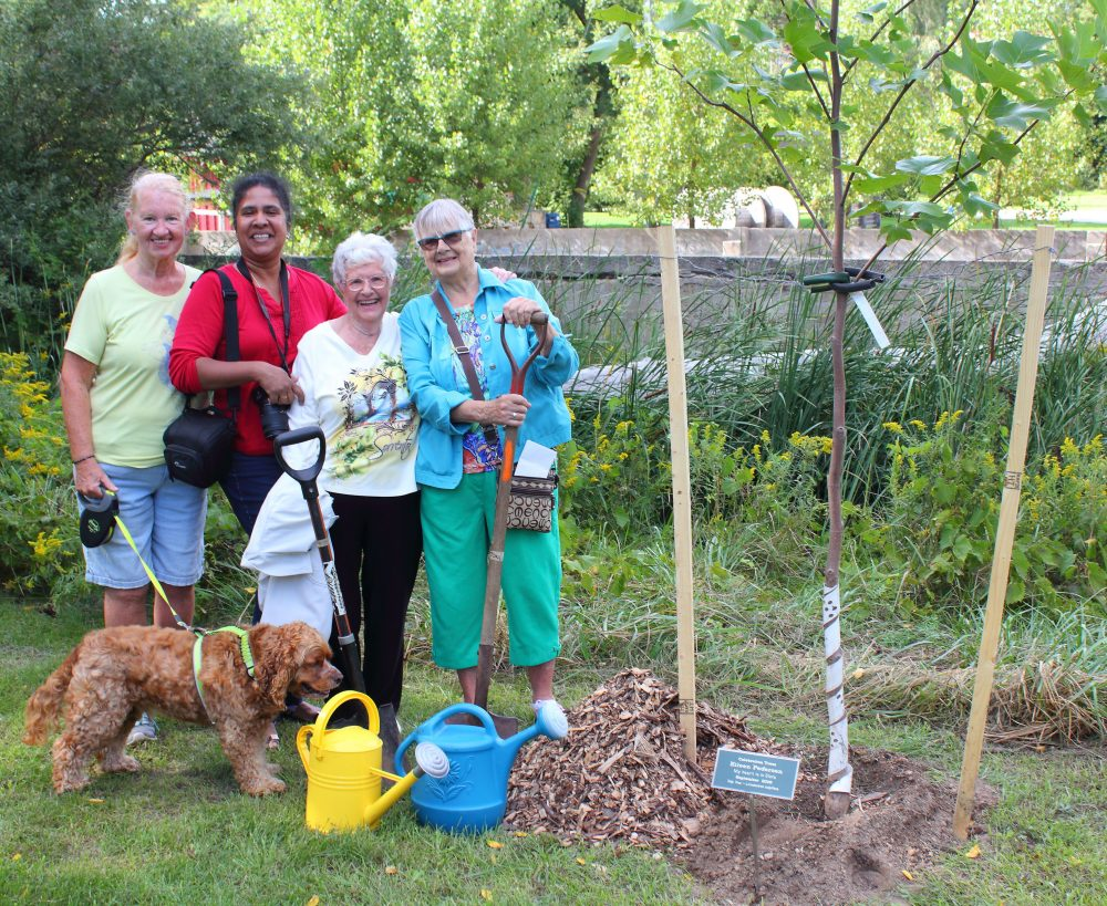 Eileen Pedersen celebrates her love of Elora with her friends,  in Bissell Park, Elora which now is home to a new Tulip Tree.