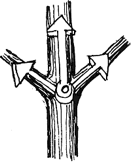 diagram illustrating which branches to prune
