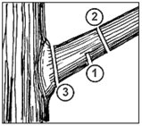 diagram of labelled pruning cuts