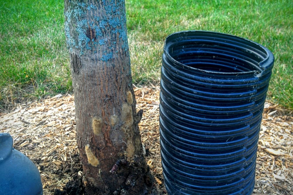 damage done to tree by plastic tube shielding