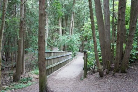 wooden bridge in the forest surrounded by trees