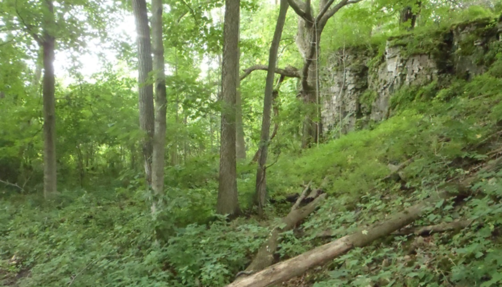 trees in a forest, below an escarpment