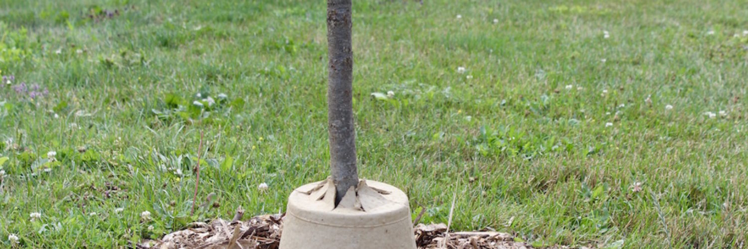 young, healthy tree using one of the Neighbourwoods Tree Guards.